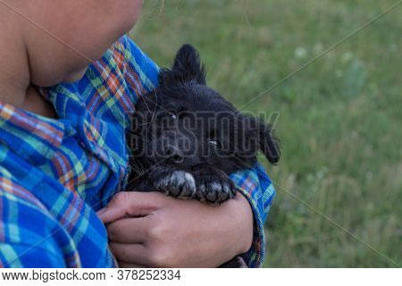A Girl In A Plaid Blue Shirt Is Holding Her Little Black Dog. A Beautiful Puppy Looks At The Camera.