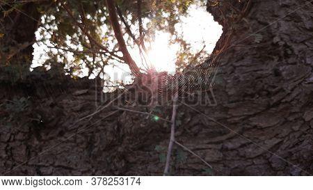 Shining Spider Web Or Cobweb In Sunlight Closeup