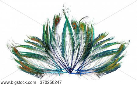 Bright Peacock Feathers. Peacock feathers folded in the shape of a lotus flower