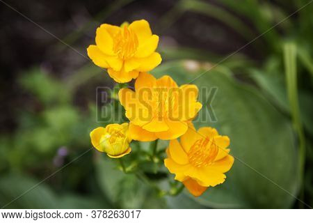 Several Crisp Yellow Flowers Found In Park