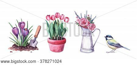 Illustration Set For Garden With Watercolor. Flowers In The Soil, Arrangement In A Vintage Metal Pit