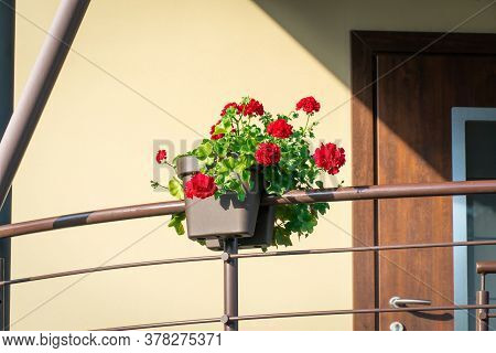 Red Geranium Flowers In A Pot On The Railing Of A Country House On A Sunny Day