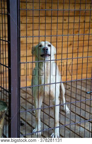 White Dog In A Cage In The Yard. The Shelter For Homeless Animals.