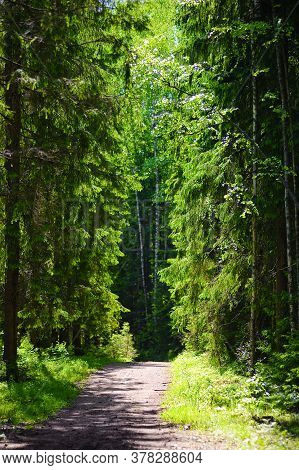 Forest Unpaved Road On A Sunny Day
