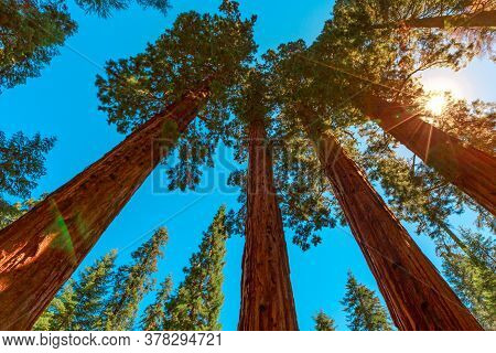 Sequoia National Park 360 Degrees Panorama In The Sierra Nevada In California, United States Of Amer