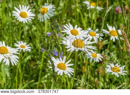 Sunny Illuminated Full Frame Flower Meadow Closeup At Spring Time