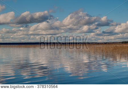 Dry Cane Thicket Golden Reflection Blue Pond Water, Thickets Of Dry Reeds Pond Bank Plants, Winter N