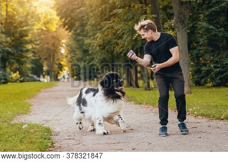 Newfoundland Dog Plays With Man And Woman