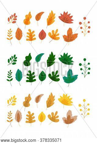 Autumn Leaves Colorful Compositions, Vector Illustrations Set