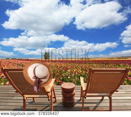 Magnificent flower carpet of multicolor garden buttercups - ranunculus. The concept of botanical tourism. Wooden deckchairs and a table for relaxing. Elegant women's hat hung on a chair