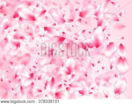 Pink Cherry Blossom Petals Isolated On Rose Color Background. Postcart Background. Pastel Pink Bloss