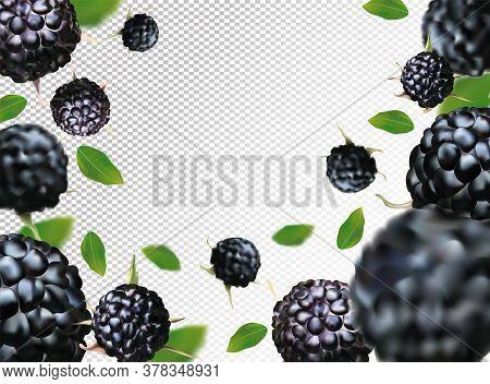 Black Raspberry Background. Flying Black Raspberry With Green Leaf On Transparent Background.black R