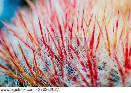 Beautiful Macro Shots Of Prickly Cactus. Background And Textures