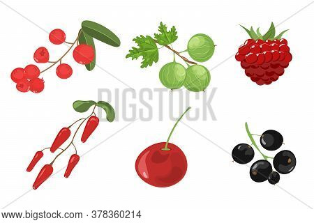 Set Of Hand Drawn Berries Isolated On White Background. Cherry, Cranberry, Gooseberry, Strawberry, B