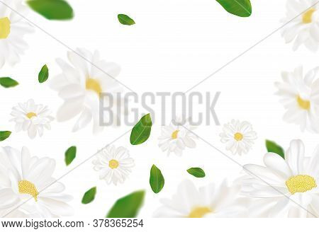 3d Realistic Chamomile With Green Leaf. White Chamomile In Motion. Beautiful Flower Background. Cham