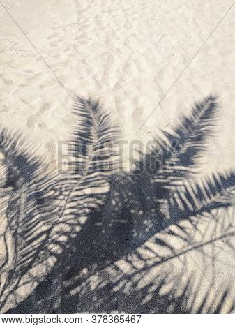 Shadow Of Palm Trees On The Beach. The Black Silhouette Of Palm Trees On The Sandy Beach. The Black