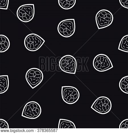 Walnuts Background Vector Illustration In Thin Line