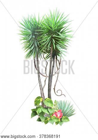 Frame with palm, liana branches, flowers and tropical leaves. Exotical border with plants of jungle and copy space for text. Isolated on white background. Mock up template