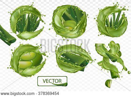 3d Realistic Fresh Aloe Vera On Transparent Background. Collection Green Aloe Vera With Splash Liqui