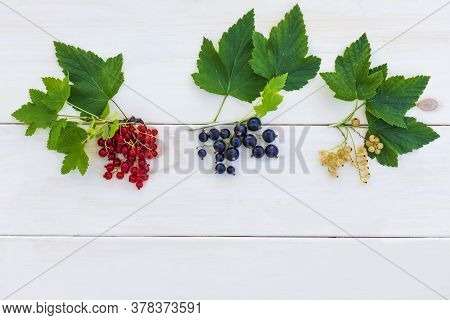 Set, Composition Of Different Types Of Currants. Branch With Leaves Of Red Currant, Black And White.
