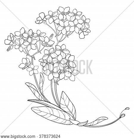 Vector Corner Bouquet With Outline Forget Me Not Or Myosotis Flower Bunch, Bud And Leaf In Black Iso