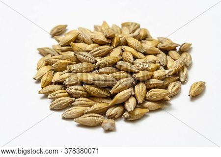 Barley Malt On A White Background. Big Heap Of Cereal Grains Isolated Close Up. Seeds Of Barley, Whe