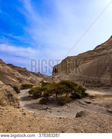 Wide dirt road and blooming desert acacia after rains. Ecological, active and photo tourism concept The coast of the Dead Sea. Magnificent stone canyon in the mountains of the Judean desert