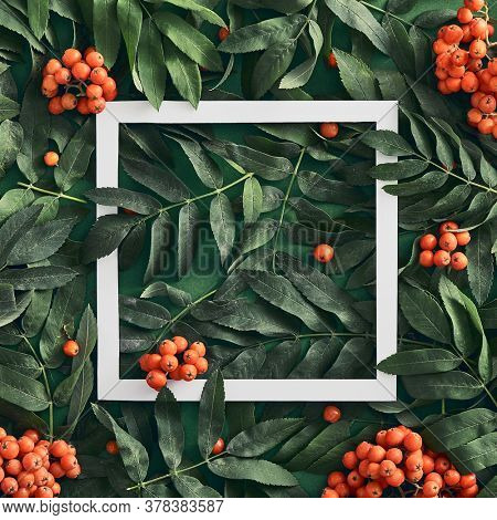 Forest sorbus and leaves top view on green background. Red wild rowan and branches social media post with copyspace design. Wild berries square frame concept. Fall botanical backdrop, border idea