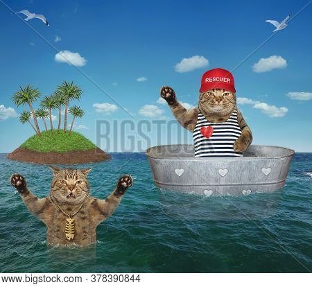 The Beige Cat Lifeguard In A Red Cap Is Drifting In A Metal Oval Wash Tub To Help A Drowning Cat In