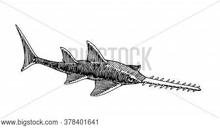 Stingray, Sawfish, Sea Predator, Engraving, Sketch, For Logo Or Emblem, Vector Illustration With Bla
