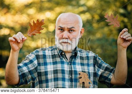 Happy Grandfather Holding Yellow Leaf Over Autumn Leaves Background. Golden Age Grandfather. Happy S