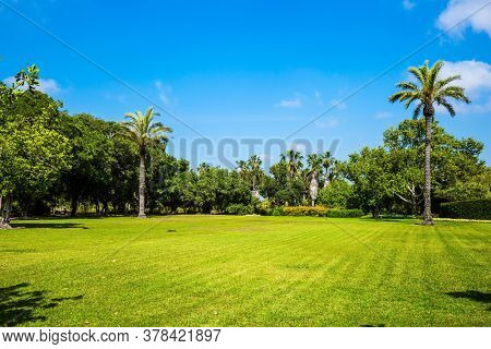 The magnificent botanical park on the slopes of Mount Carmel. Israel. Large green grassy meadow in the center of the park. Great walk in a clean well-kept park