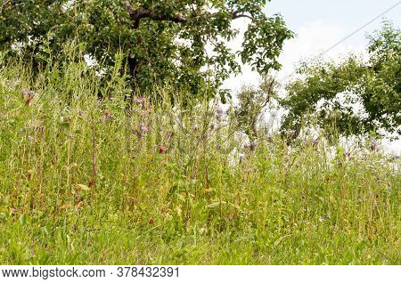A Bee Friendly Meadow In An Orchard In Summertime With Wildflowers