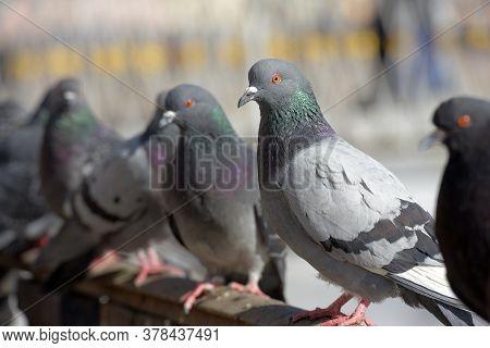 Pigeons On The Railing