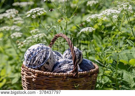 White-blue Fluffy Woolen Balls In A Basket On A Natural Background Of White Summer Flowers. Horizont