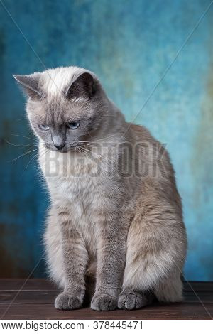 Portrait Of A White Cat On A Blue Background In The Style Of Grunge.