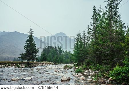 Beautiful View To Mountain Creek With Many Stones In Clear Water Among Firs And Vegetation. Atmosphe