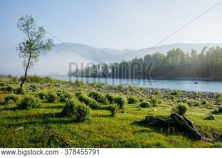 Wonderful Green Morning Landscape With Alone Tree Near Mountain River In Fog. Beautiful Snag On Mead