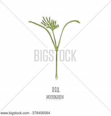 Hand Drawn Dill Micro Greens. Vector Illustration In Sketch Style Isolated On White Background.