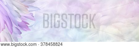 Multicoloured Pastel Angel Feather Message Banner Background - A Pile Of Long Rainbow Coloured Feath