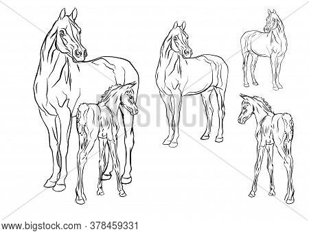 Set Of Vector Isolated Monochrome Hand-drawn Images Of A Mare With A Foal Of An Arab Horse Breed On