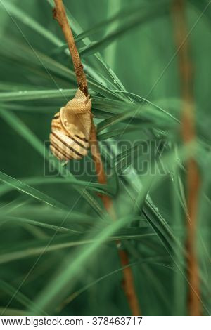 A Small Snail On Long Brown Sprig