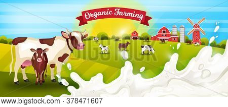 Milk Farm Vector Landscape With Livestock, Cows, Calf, Milk Splash, Barn, Mill, Rising Sun. Organic