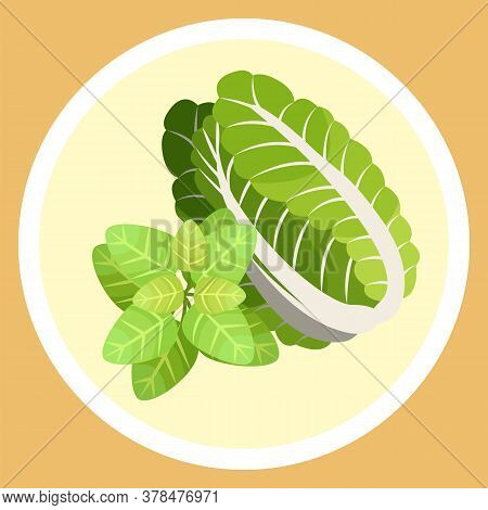 Isolated In Circle Chinese Cabbage And Basil Leaves. Natural Organic Vegetable And Greenery For Sala