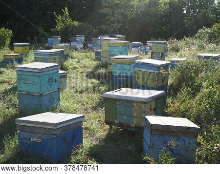 Colorful Hives With Bees On A Meadow In An Idyllic Mountain Region Pollinating The Blossoming Flower