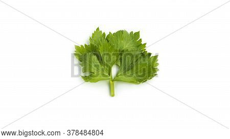 Greenery. Sprigs Of Parsley On A White Background. Macro Photo.