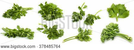 Greenery. Sprigs Of Parsley On A White Background. Several Photos From Different Angles. Macro Photo