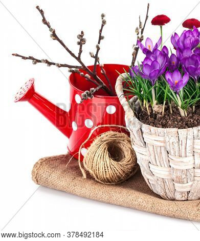 Spring still life with flowers crocus and branch tree. Isolated on white background.