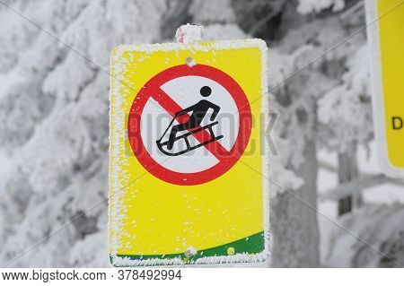 Yellow Tobogganing Or Sledging Ban Sign, Snowy Winter Forest In The Back