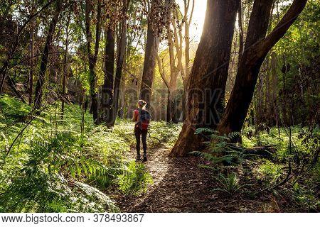 Hiker Walking Along A Trail In Australian Bushland